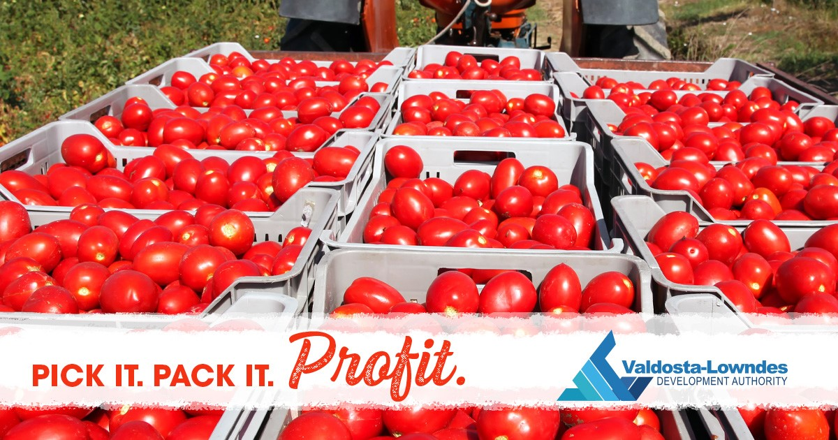 Pick It. Pack It. Profit. Tomatoes being picked on a farm.